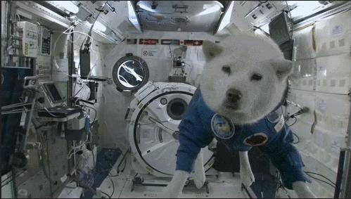 Un shiba dans l'espace !
